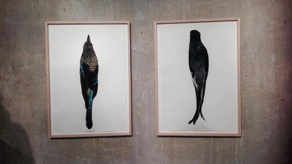 Roos Holleman – Twee paradijsvogels